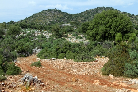 clay stone road in jungle: Dirt road and green bush in Turkey