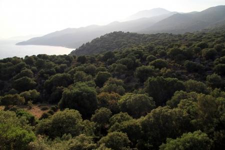 mediterranean forest: Mediterranean coast in Kekova region, Turkey