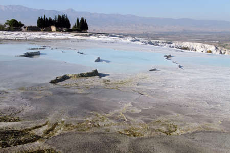 Trees and travertine formations in Pamukkale, Turkey photo