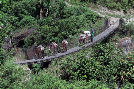 Cravan with donkeys on the suspension bridge in Nepal