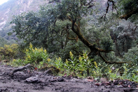 Wet dirt road amd forest in mountain in Nepal photo