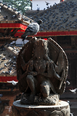 One dove on the statue in Durbar square of Khatmandu, Nepal photo