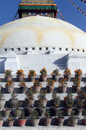 bodnath: Pots with flowers on the staircase of stupa Bodnath in Kathmandu, Nepal
