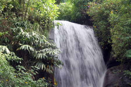evergreen forest: Evergreen forest and small waterfall in Sri Lanka