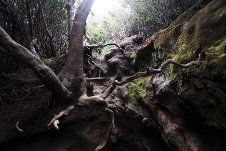 volcano slope: Footpath in ravine on the slope of volcano Kerinci in Indonesia Stock Photo