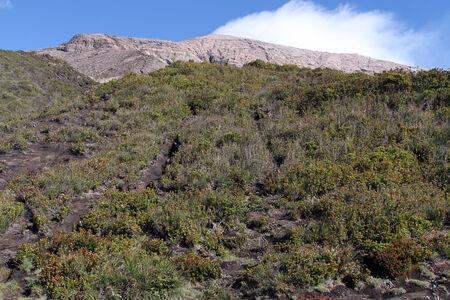 volcano slope: Dence bush on the slope of volcano Kerinci in Indonesia