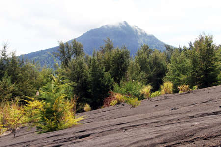volcano slope: Forest on the slope of volcano Krakatau in Indonesia