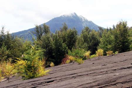 volcano slope: Forest on the slope of volcano Krakatau in Indonesia