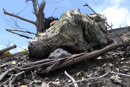 volcano slope: Rock near dry dead tree on the slope of Krakatau volcano, Indonesia