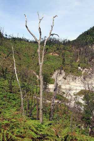 volcano slope: Forest on the slope of Kawah Putih volcano crater in Indonesia