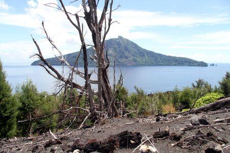 volcano slope: Dead tree on the slope of volcano Krakatau in Indonesia
