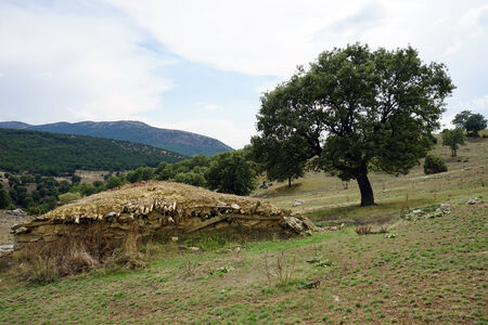 dugout: Dugout and big tree, Turkey