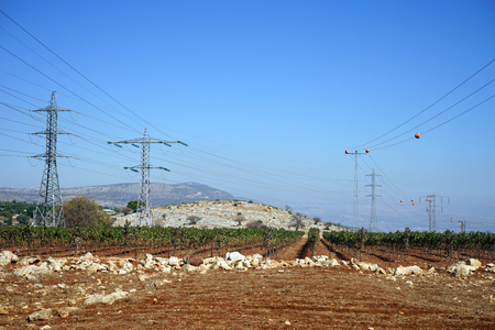 israel farming: Vineyard and electrical pylons in Galilee Stock Photo