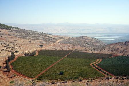 israel farming: Green orchard in Galilee, Israel