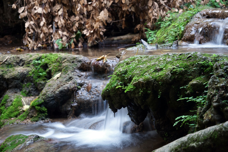 nahal: Smooth waterfall and dry leaves on the branc
