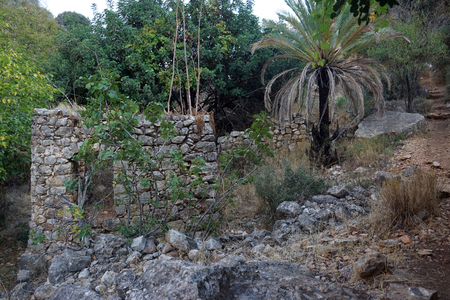 Ruins of old mill and palm tree in Nahal Amud, Israel Stock Photo
