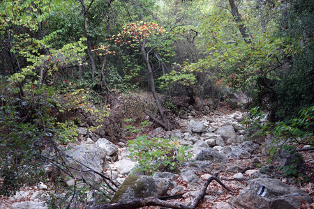 nahal: Autumn in the forest, Israel