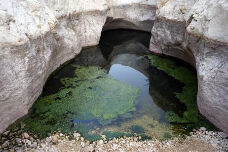 water spring: Water spring Ein Zafit in Negev desert, Israel