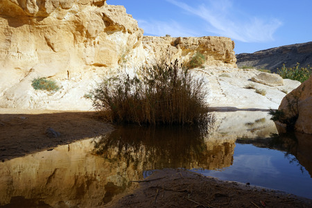 ein: Bush and water in Ein Yorkeam natural pool in Israel Stock Photo