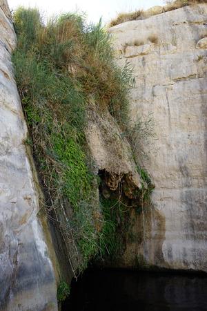 ein: Green grass and spring Ein Akev Stock Photo