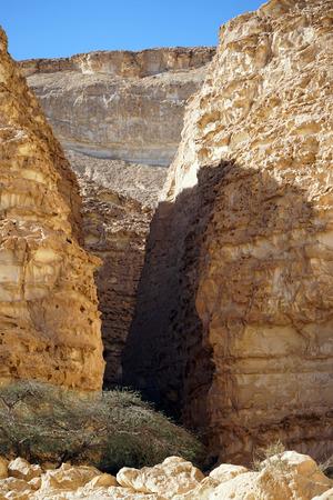 canyon negev: Tree in Barak canyon in Negev desert in Israel