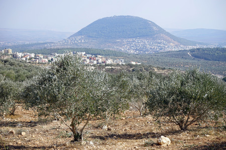 nazareth: Olivr trees grove and Tavor mount in Israel Stock Photo