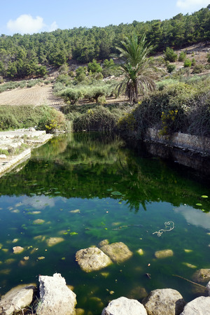 ein: Green water in Ein Ivka spring, Israel