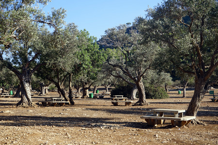 nahal: Olive trees and picnic tables in Nahal Mearot in Israel