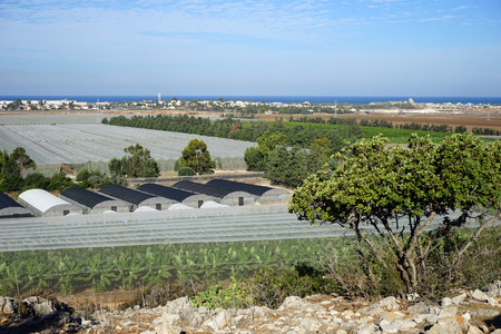 israel agriculture: Banana plantation and greenhouses on the coast in Israel