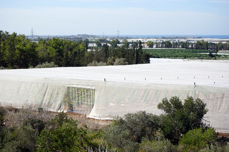 israel agriculture: Big white plastic greenhouses and orchard in Israel