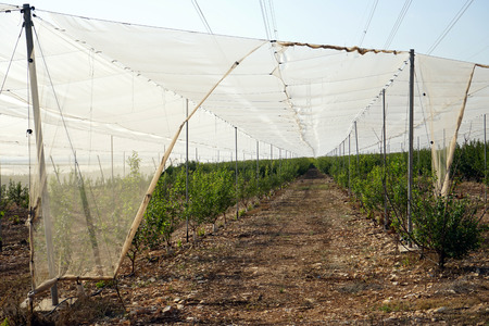 israel agriculture: Green trees under the cover in Israel