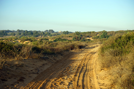 nahal: Track on the sand near Nahal Alexander in Israel Stock Photo