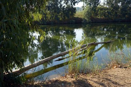 Eucaliptus and river in Nahal Alexander national park, Israel Stock Photo