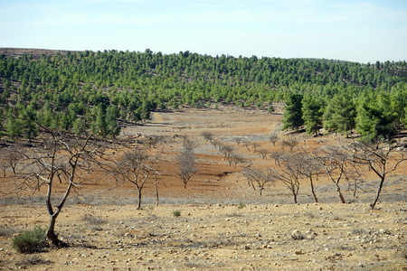 israel farming: Autumn in the orchard, Israel