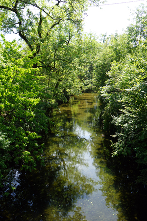 sunligh: Sunligh and river in the forest in Germany