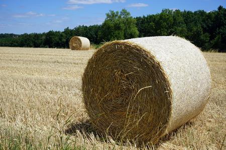 haycock: Stubble farm field in France