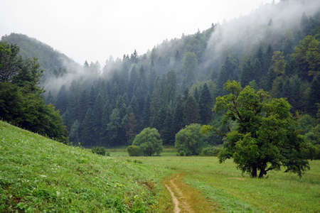 footpath: Footpath on the slope of hill and forest on the hill in Switzerland Stock Photo