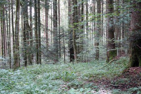 deciduous forest: Deciduous forest in Switzerland Stock Photo