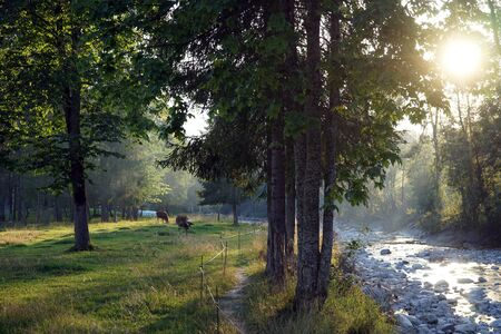 footpath: Footpath near small rivernear pasture in Switzerland Stock Photo