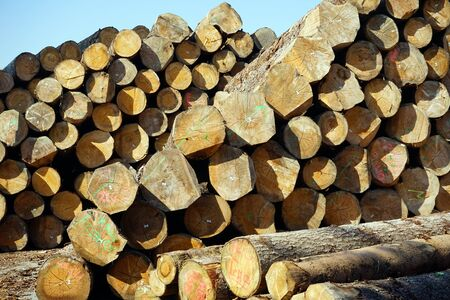 lumbering: Heap of timber in storage in Switzerland