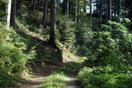 deciduous woodland: Track in the forest in summer Switzerland Stock Photo