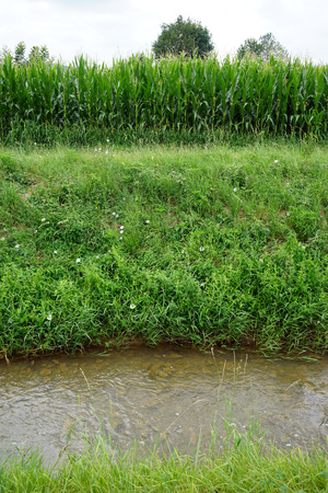 non cultivated: Canal near green corn field, France Stock Photo