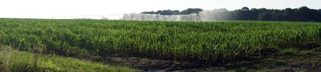 non cultivated land: Irrigation on the green field in farm, france