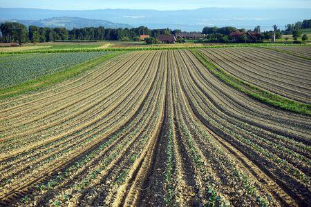 plowed: Plowed fields near Murten in Switzerland