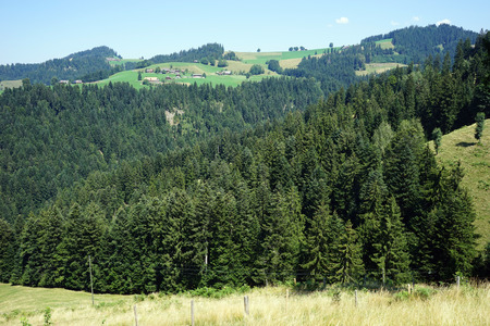 non cultivated land: Fir-tree forest and slope of mount in rural area of Switzerland