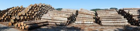 lumbering: Timber in heaps on the storage in Switzerland