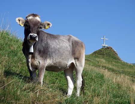 non urban 1: Cow and cross on the slope of mount in Switzerland