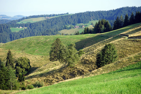 non cultivated land: Footpath and hills in Switzerlsand