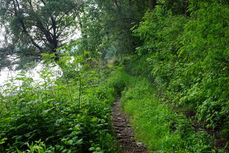 footpath: Footpath near Dunav river in Serbia