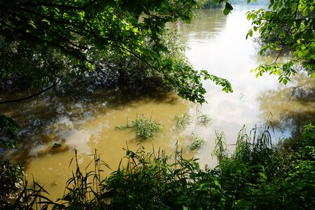 flooding: Flooding on the river and trees Stock Photo